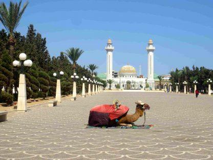 Dromadaire devant une mosquée en Tunisie