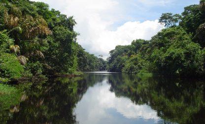 Canaux de Tortuguero à Limon dans un circuit au Costa Rica